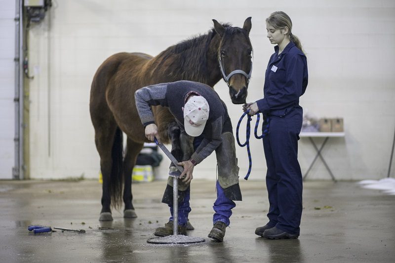 Common Hoof Problems in horses daily hoof care nutrition for equine hooves pain for sore horse hoof pain equine hoof western college of veterinary medicine