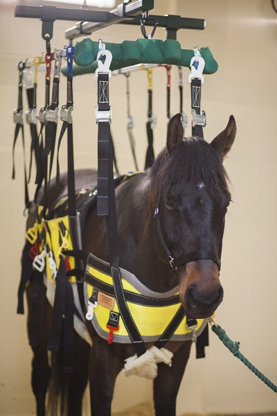 New Device Gives Healing Horses A Lift Horse Journals