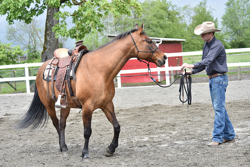 Jonathan Field, how to stop horse bucking, why is horse bucking, horse won't canter trot, groundwork for horse