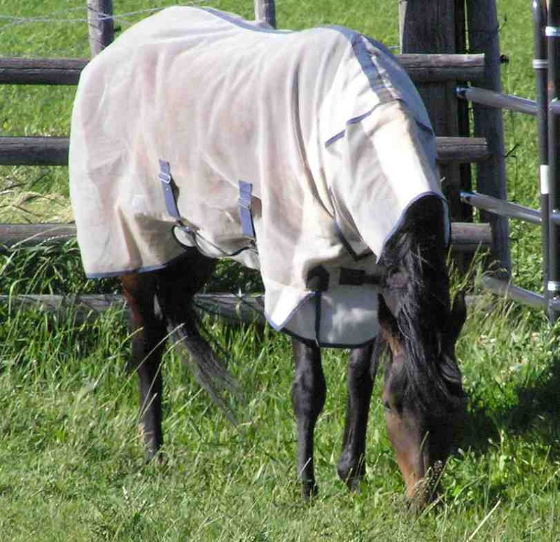 Dr. Wendy Pearson PhD, Veterinary Toxicology, seasonal pruritus, sweet itch, Type 1 allergic response insect bites, omega-3 fat, Culicoides extract, horse health, full fly sheet horse, fly mask horse