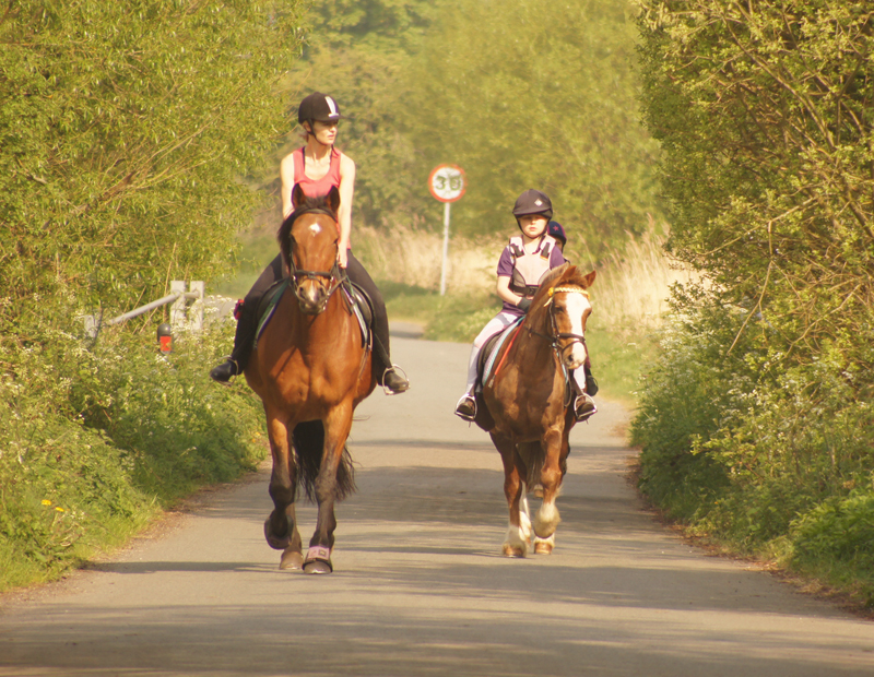 equine road safety, horse council BC, Highly visible clothing equine road safety, reflective vest when road riding horse, spook horse road riding, horse safety, horse rider safey