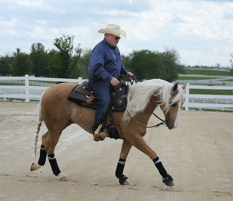starting out right horse foot, nancy tapley, horse warm-up, Karen brain, horse riding technique, horse training