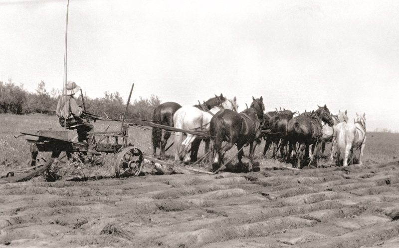 Soul of Canada, draft horses, history draft horse, four-wheeled pull-grader, Mechanical Workhorses, Horse breeding programs, history Clydesdale horse, horse logging history, Canadian horse history, Belgian horse, history percheron horse