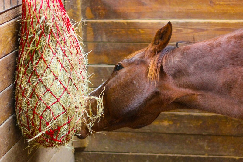 what type of hay should i give horse, horse haylage versus horse silage versus hay for horses shelagh niblock