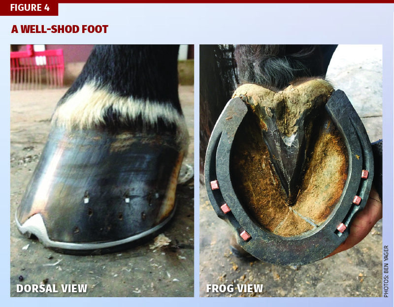Farrier, Farriey, Ben Yager, American Farrier's Association, equine trimming techniques, hoof-pastern alignment, farrier apprenticeship