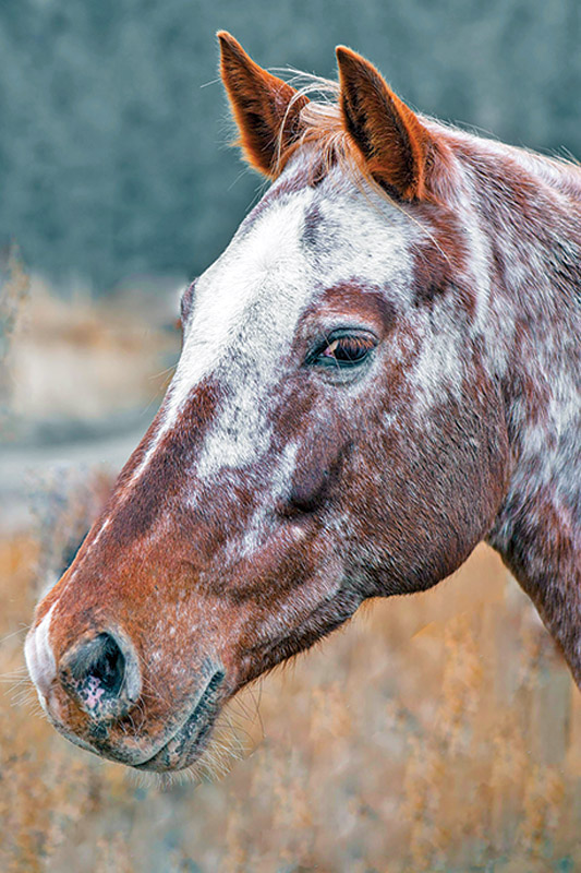 horse trailering, horses trailers, worthy of horse, good to your horse, respect your horse, pressure-free horse training methods