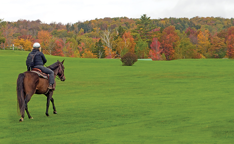 horse riding holidays in vermont, best places horse holiday, horseback riding holidays usa, horse riding in the fall, shawn hamilton, vermont icelandic horse farm