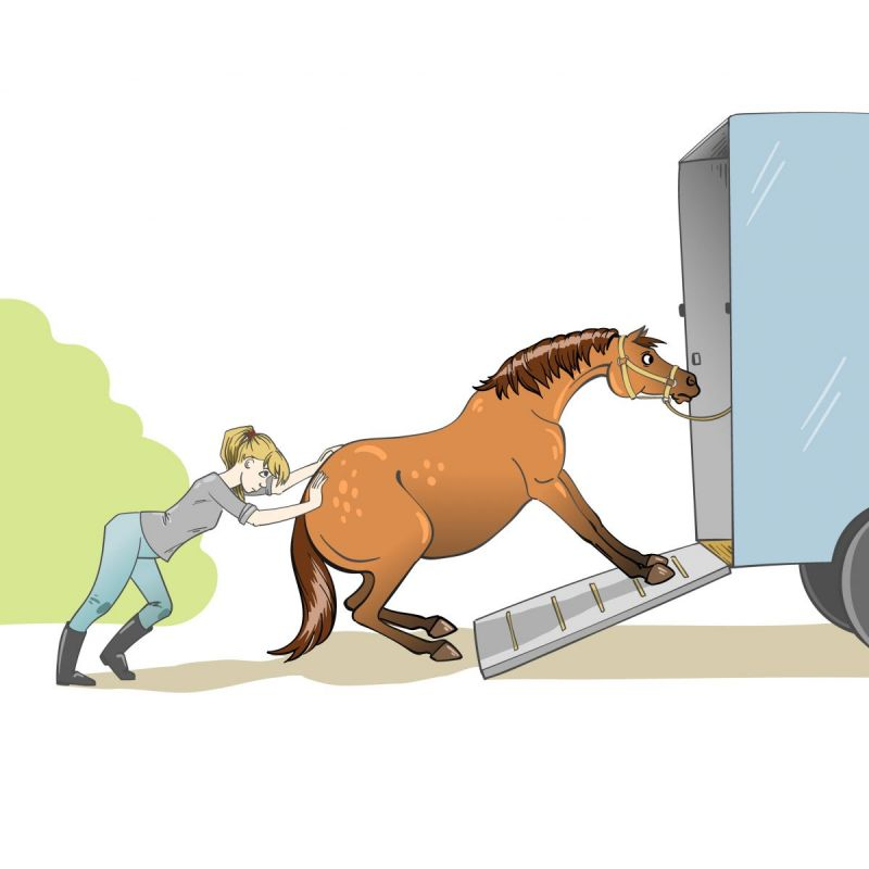 load a horse in trailer, horse won't load in trailer, loading horses, will clinging