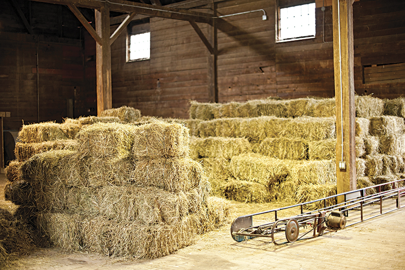 Dust Management horse barns, purdue extension, breathing for horses, respiratory disease equine, roa, dust control horse barn, horse barn renovations, better ventilation horse stable