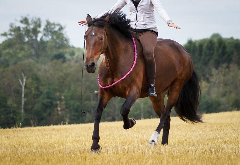 how to play with my horse, alexa linton on horse play, mindfulness activities with horses, fun equine activities, how to reduce my horse's stress, alexa linton equine sports therapist