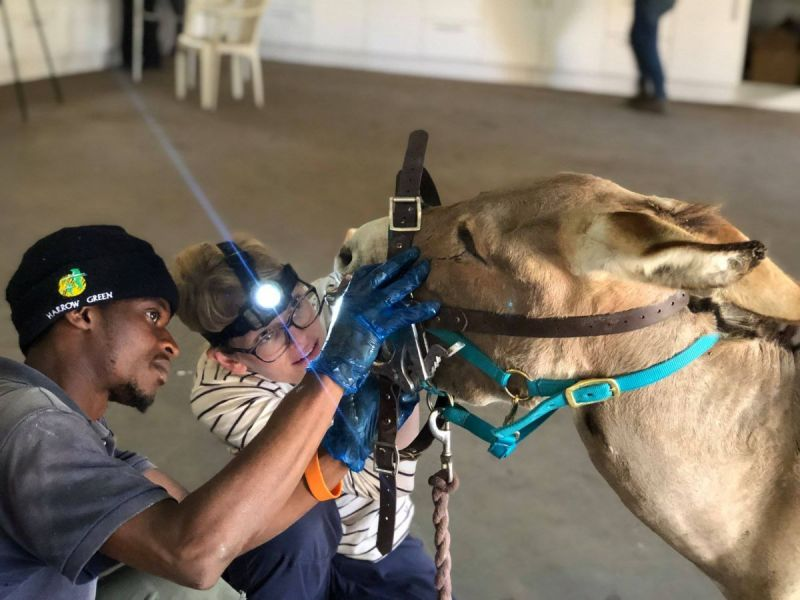 Vets with Horsepower 2021, ethelberth youth and chilcare centre south africa, horses in need, horse welfare