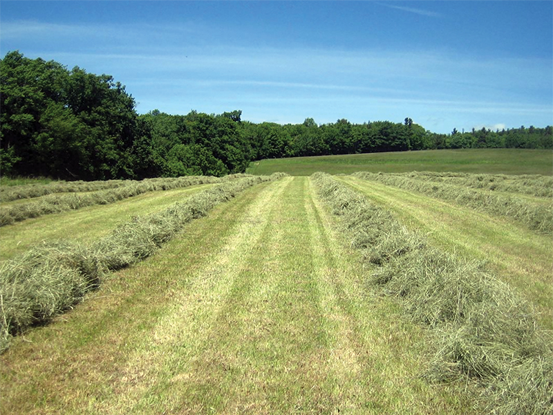 making hay for horses, first cut hay vs second cut hay, nikki alvin smith, how to store horse hay, mouldy hay horses, moist hay horses, preventing barn fires
