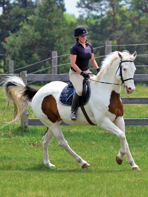 schooling horses, lindsay grice, canadian equestrian coaches, horse learning styles, how do horses learn? types of horse training, horse riding lesson plan, communicating with horses