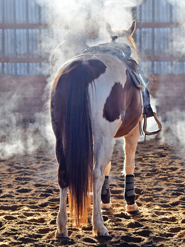 shelagh niblock horse nutrition, horse's diet ppid, equine cushings disease, tying up horse, metabolic conditions horse, pssm type 1 and 2 horses