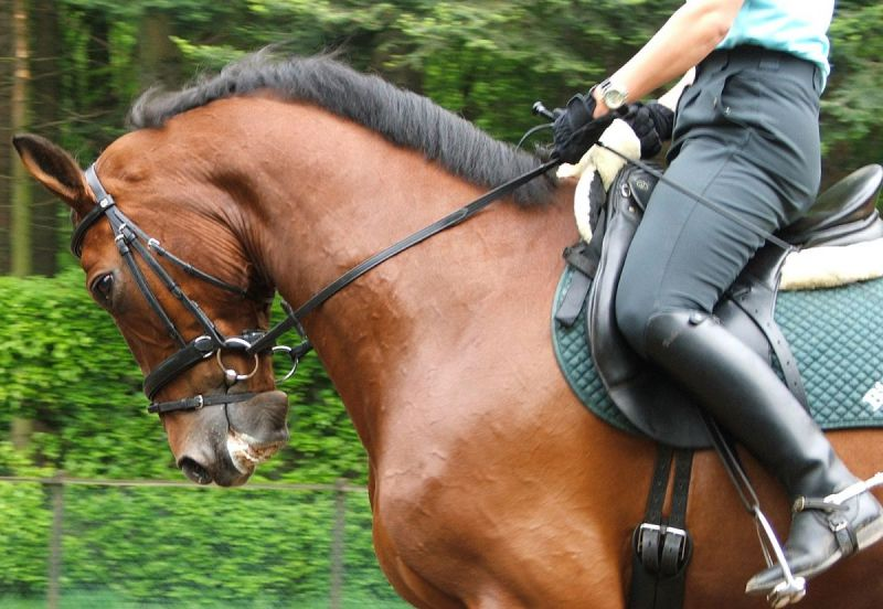 nosebands for horses, how to put on a horse noseband, is an equine noseband acceptable?, ises equine