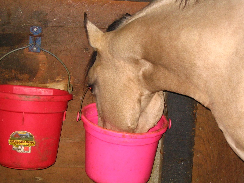 Develop Your Horse's Topline, protein in horse feed for performance amino acids horses otter co-op feed, athletic horse feed