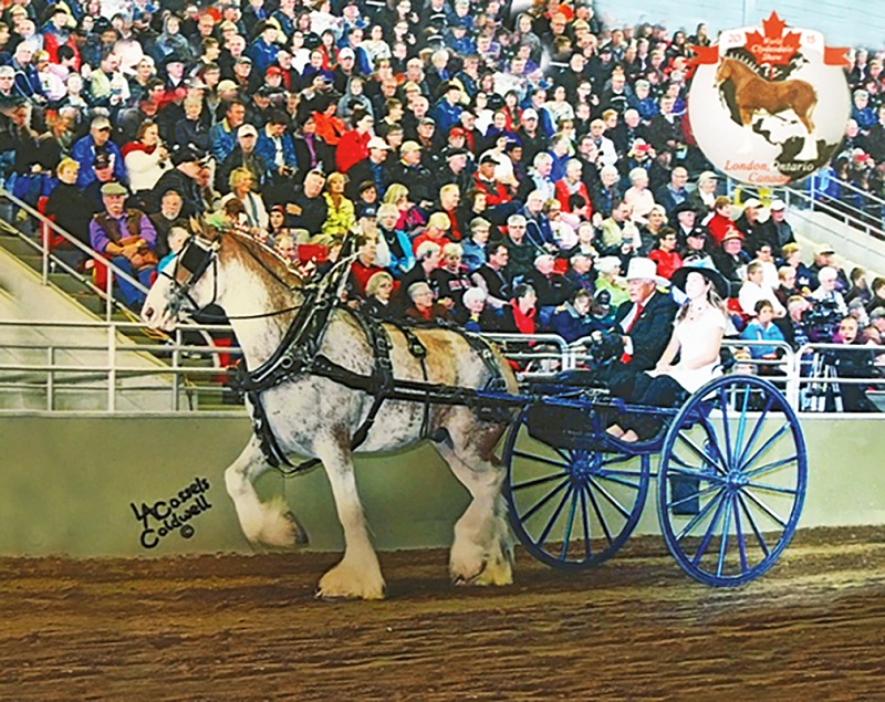 Clydesdale horse, Stan Carruthers, Gordon Carruthers Sr, Clydesdales, Eastern Regional Clydesdale Association, Clydesdale breeding program