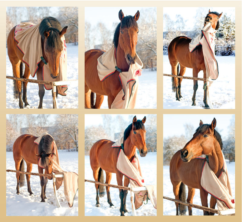 Horse Blankets, are Horse Blankets necessary, horse body temperature, buying a horse blanket, horse blanket do's and dont's, do horses need blankets
