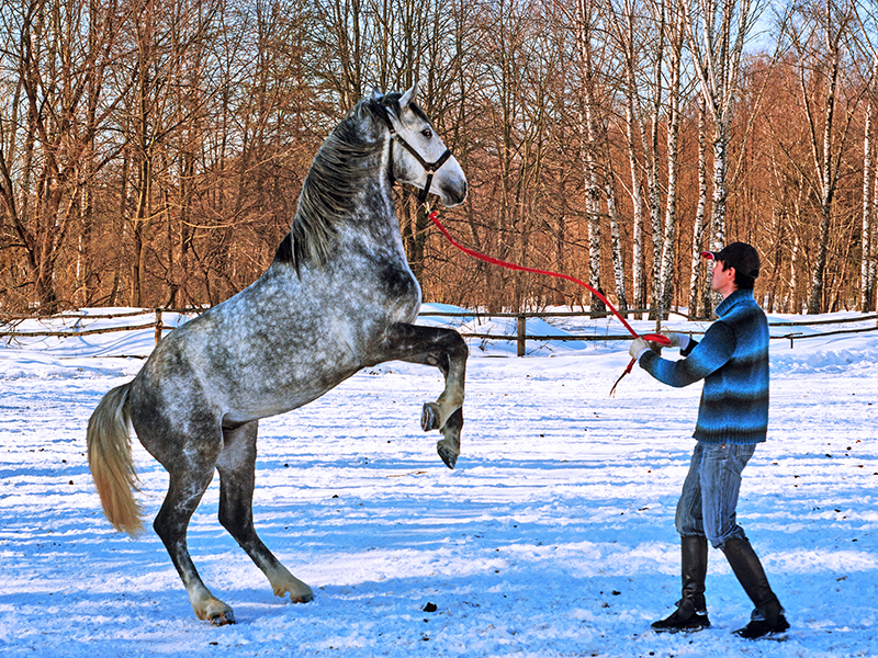 horse welfare, equitation science, code of practice for care and handling of equines, five freedoms of animal welfare, equine guelph