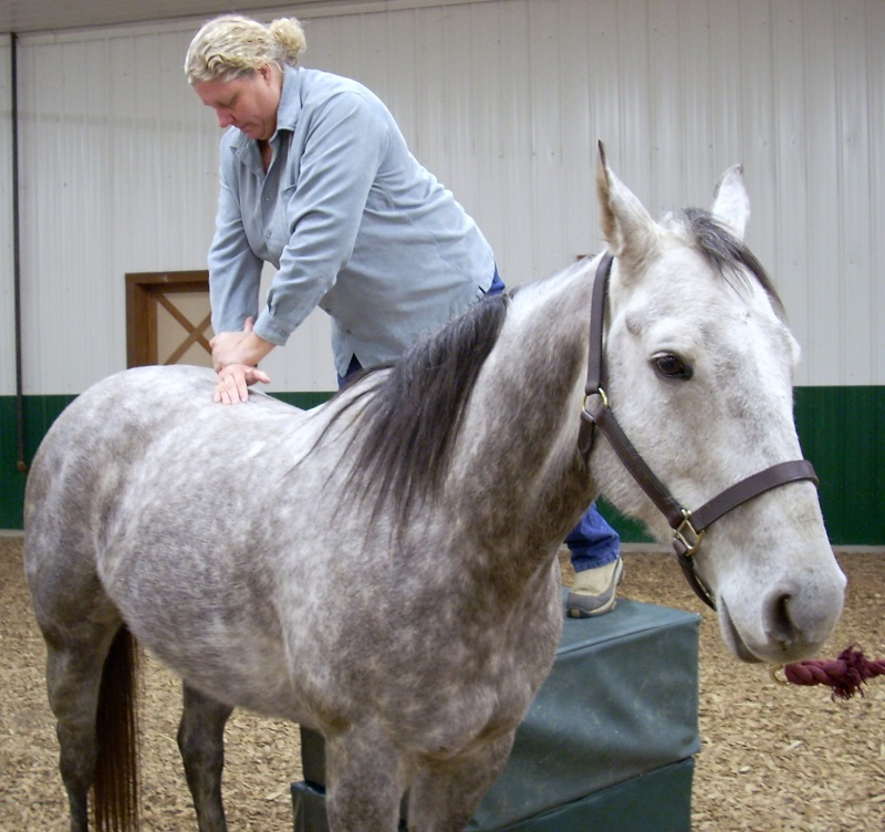 chiropractors for horses canada, equine chiropractic, chiropractor for lame horse, joint pain horse