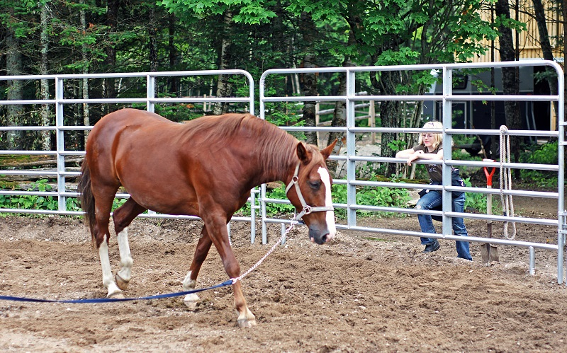 equine pre-purchase exam, how to buy a horse, how to exam a horse for purchase, horse pre-purchase exam, selling a horse pre-purchase exam, pre-purchase vet check horse