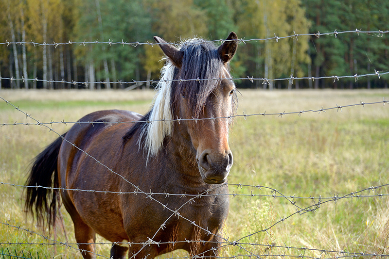 what is the safest type of horse fencing? What is most functional type of horse fencing? different types of horse fencing, vinyl horse fencing, electric horse fencing, polywire horse fencing, tape horse fencing