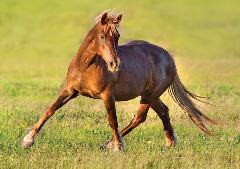 horses joints sore, how to help my horse's pain, pain in joint horse, alexa linton, joint supplements horses