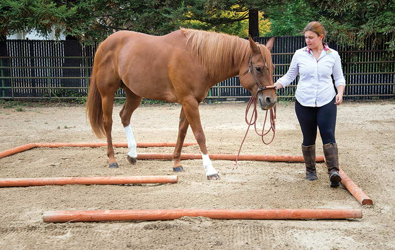 jec a ballou groundwork, stretches for horse, equine neuromuscular patterns, imbalance in horse exercises