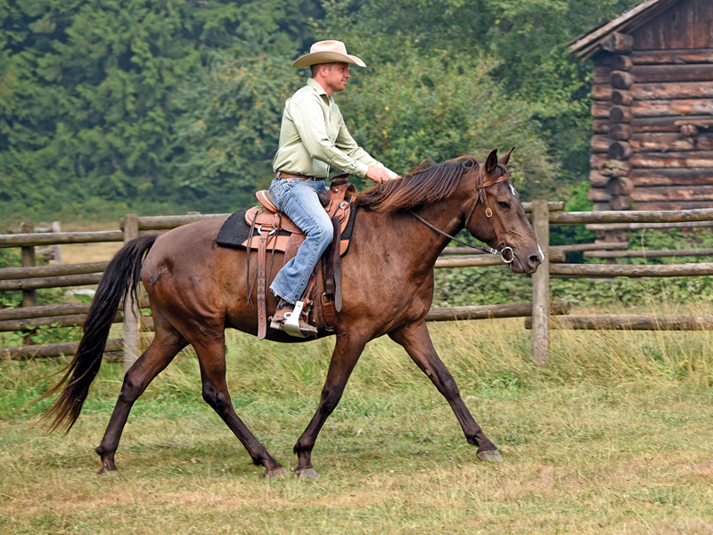 Jonathan Field training tips, how to train young horses, tips on training young horses, how to get the most out of your young horse