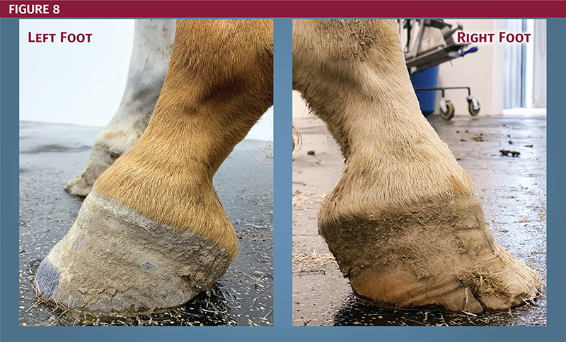 dr kirby penttila wcvm, burwash equine services, club foot in horses, mismatched horse feet, grades of club foot in horses, radiographs horses, how to fix equine club foot