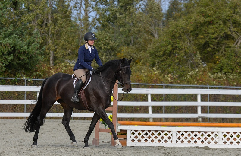 walking horse jump course, learning your horse jump course, studying equine jump course