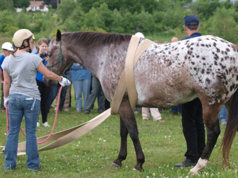 equine emergencies, what to do in case of a horse trailer accident, how to help my horse in an emergency, horse rescuers