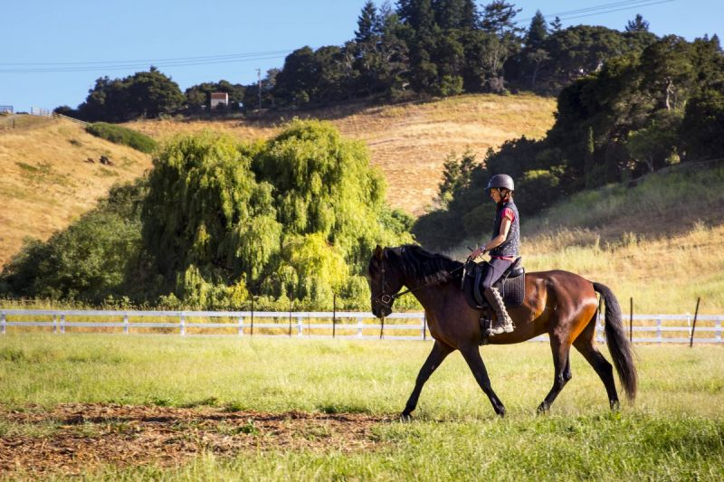spring conditioning horse, spring horse exercises, prepping your horse for show, exercising horse, jec ballou, equine groundwork, horse, dressage horse exercises, jumper horse exercises, western horse exercises, hunter horse exercises