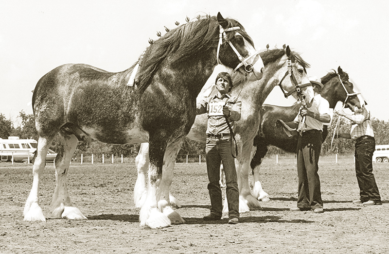 Clydesdale horse, Delvin Szumutku, Clydesdale Creeks Conroy, Clydesdale Creeks Princeton, Terragold Farm, Boulder Bluffs Maxwell, clydesdale breed, equine giants
