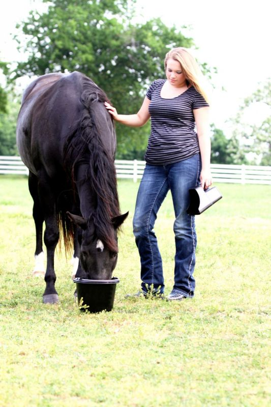 horse Low-NSC Diet, Tribute Equine Nutrition, sugar in horse hay, starch horse hay carbohydrates, how much nsc horse have