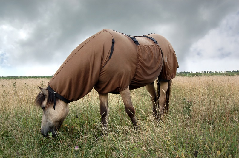 horse rug causes overheating, overheating horses, equine thermoneutral zone, sweet itch rug covers, equine thermoregulation