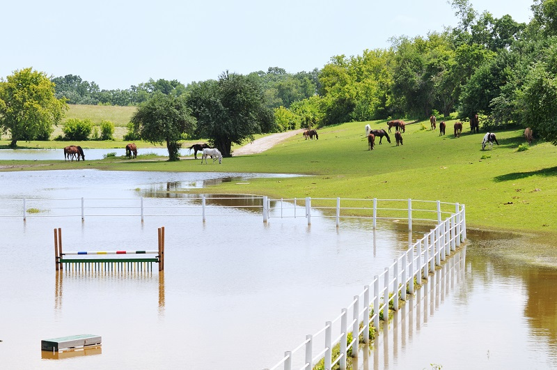 Insurance Coverage for horse industry, natural disaster insurance coverage, Homeowners' Insurance Policy, horse barn fire coverage, mitigate insurance risks