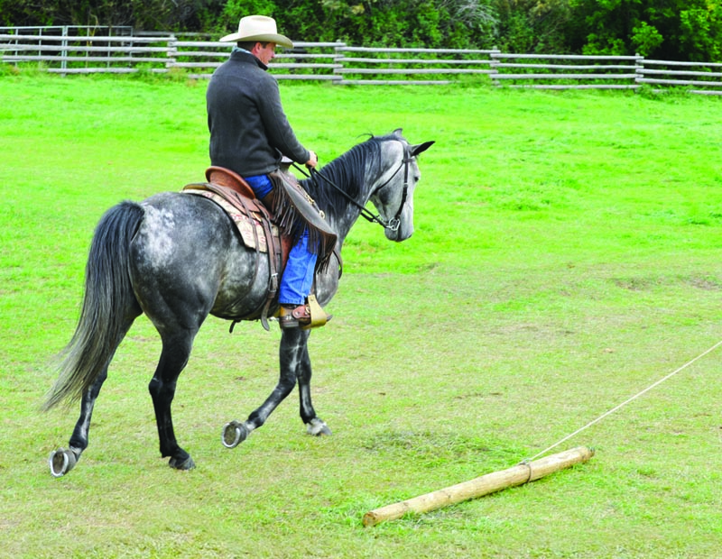 Build Your Horse's Confidence with jonathan field, natural horsemanship, exercises with horsesBuild Your Horse's Confidence with jonathan field, natural horsemanship, exercises with horses, jonathan field dragging a log, horse confidence