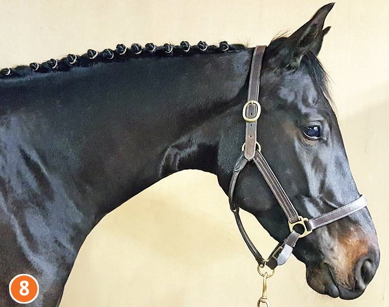 how to braid horse for hunter, how to braid horse for jumper, how to braid horse for dressage