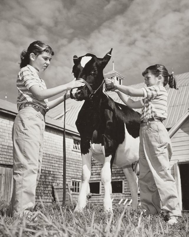 what is 4-h? how do I sign my child up for 4-h? 4-h riding lessons, horses in 4-h, shelagh niblock, what is a 4h project?