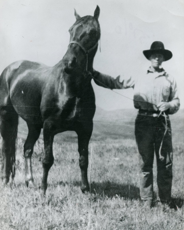 Midnight horse, Jim McNab Cottonwood Ranch, remarkable canadian horse Midnight horse