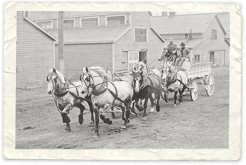 history of horses in canada, canadian horse history, Sir Donald Smith, Edward Mallandaine, canadian equine history
