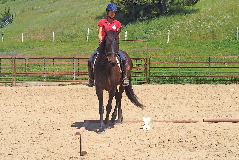 horse to lateral work Jec A. Ballou prancing dressage horses, lateral movements shoulder-in haunches-in dressage exercises, conditioning horse, offer unrivaled conditioning effects for almost any equine athlete