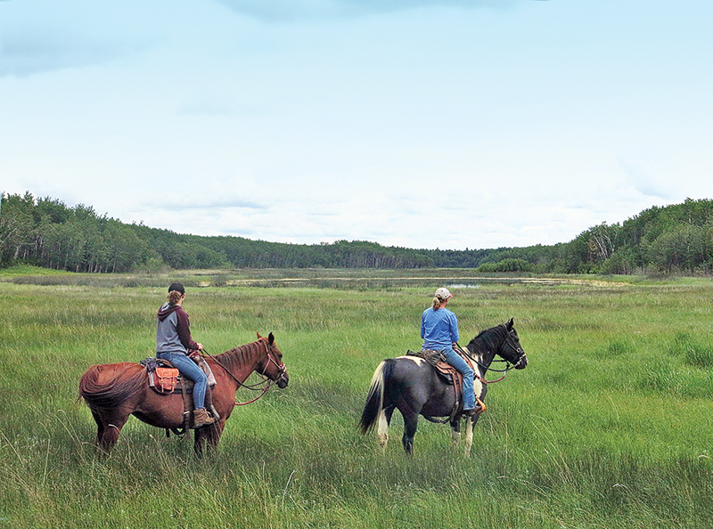 riding with bison in canada, bison in the canadian wilderness, horse riding with bison, Bison in Grasslands National Park