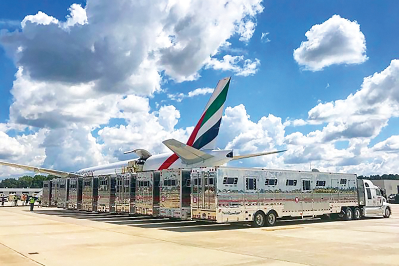 can horses go on airplanes, how to ship a horse overseas, quadriga horse transport, shipping horses by air
