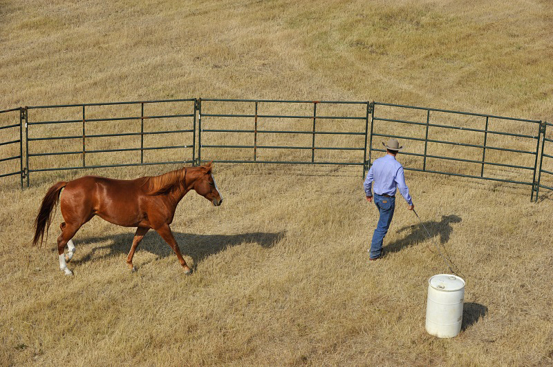 Equine Drive Line, horse drive line, Jonathan Field, anatomy of horse round pen, round pen liberty lesson tips, natural horsemanship