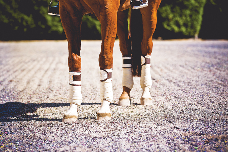 proper riding arena footing, ideal riding arena surfaces, White Paper Equestrian Surfaces, equestrian surfaces, riding arena irrigation systems, riding arena crystalline silica dust