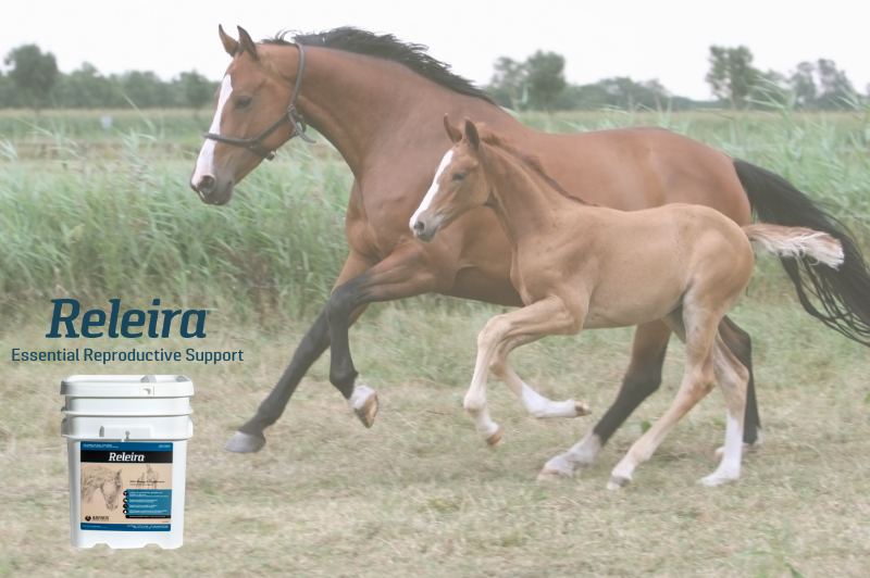 arenus equine nutrition, best equine nutrition products and horse supplements steadfast horse nutrition, colic assurance program arenus, aleira equine nutrition, relaira by arenus