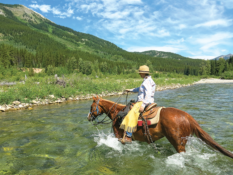 horse camping tips, some ways to improve horse camping, go camping with your horse