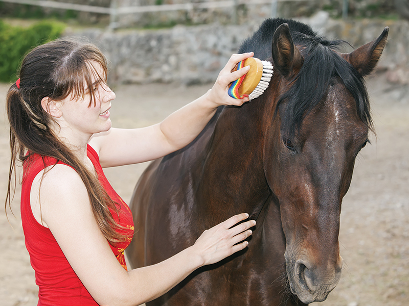 are horses sentient beings? do we need to ask consent to ride horses, alexa linton, should we domesticate horses?